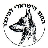 החוג הישראלי לפינצ'ר ולטרייר רוסי שחור